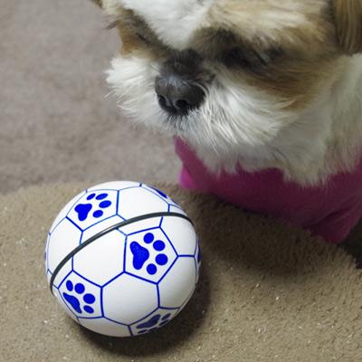 犬用おもちゃ勝手に転がる不思議なボール