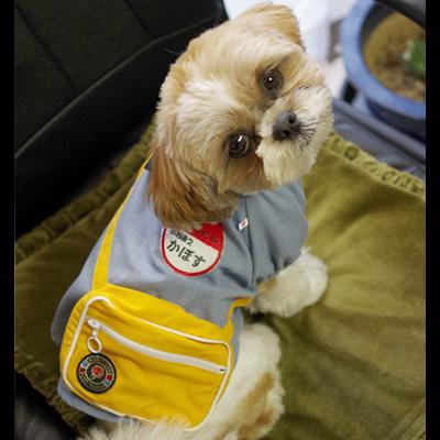 犬の幼稚園コスチューム《ブルー》