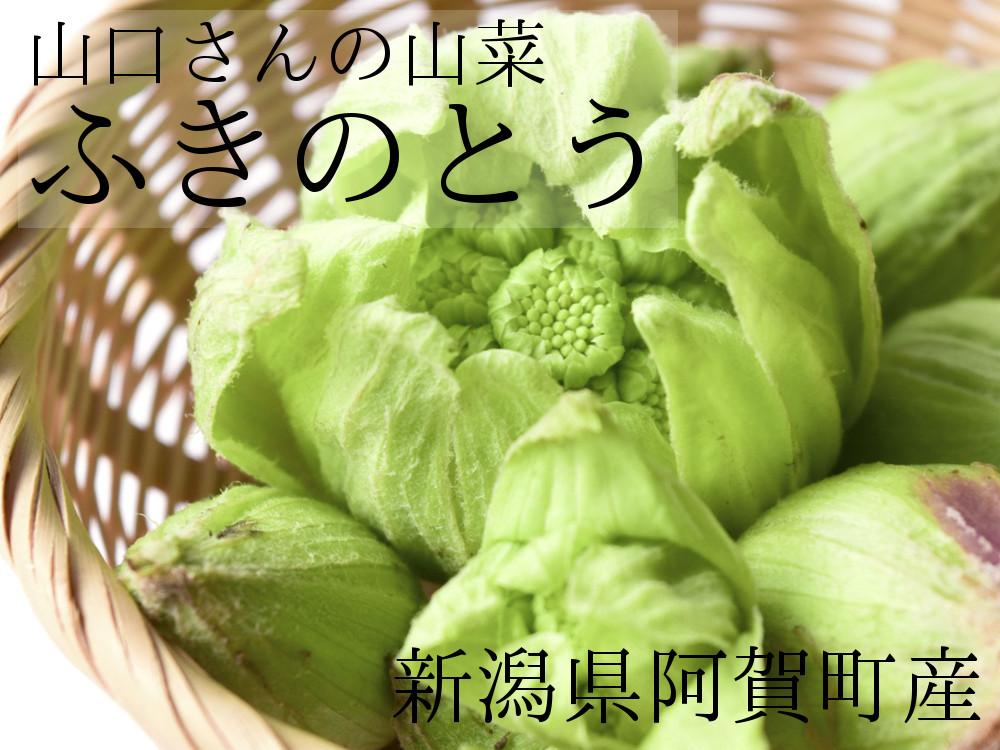 山口さんの山菜 ふきのとう 新潟県阿賀町産