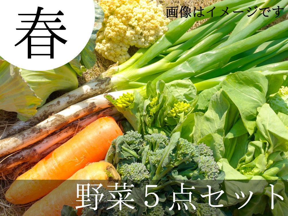遠藤さんの春野菜5点セットが送料無料