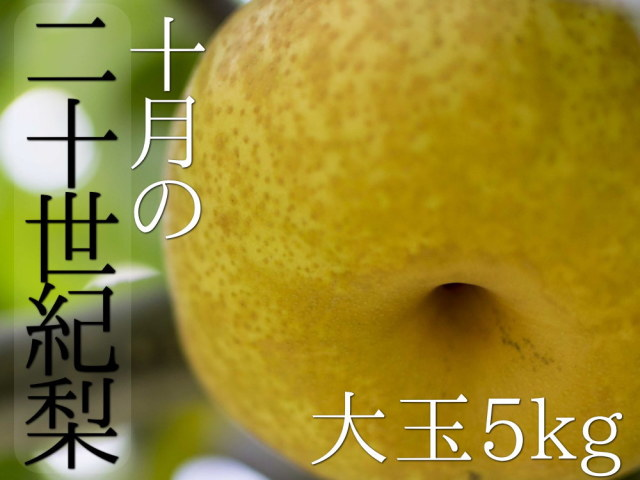 仲村農園の二十世紀梨大玉5kg4180円