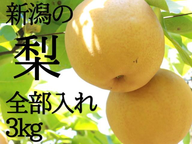 新潟の梨を全部入れ3kgセット
