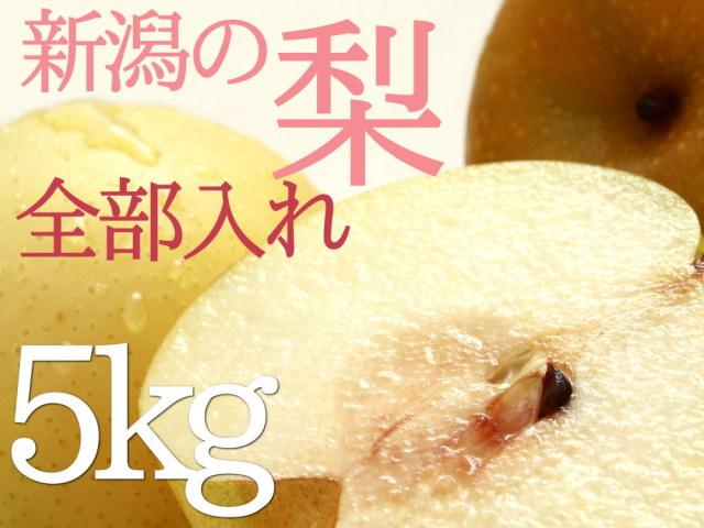 旬の梨を全部入れ4種の梨食べ比べセット5kg
