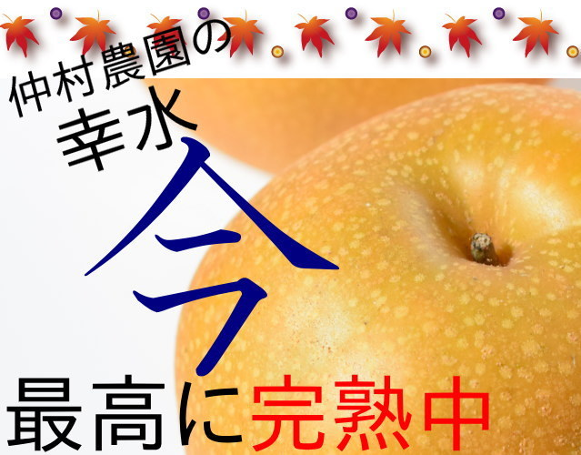 仲村農園の幸水梨5kg3980円
