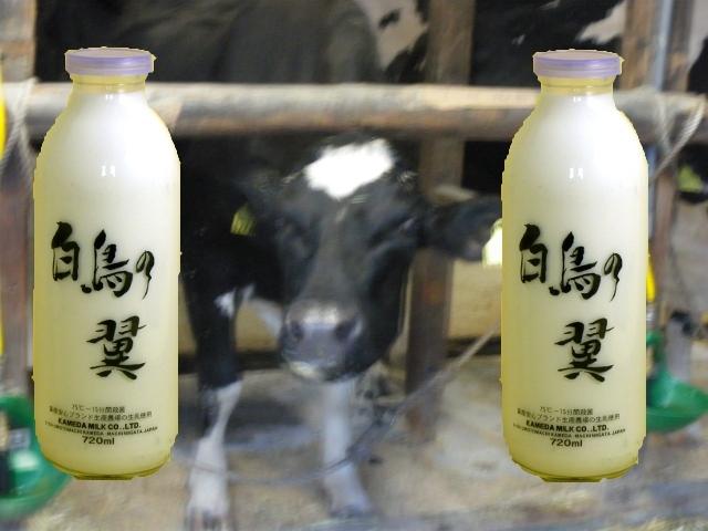 【農場直売ミルク】 牛乳 白鳥の翼