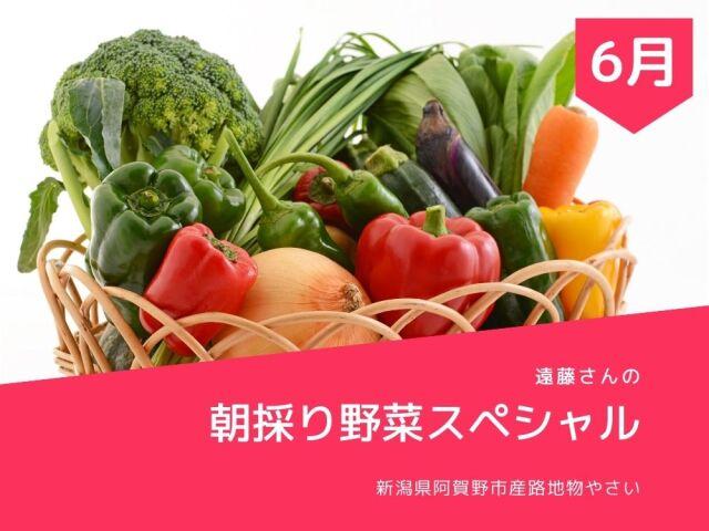 遠藤さんの朝採り野菜5点セットが送料無料