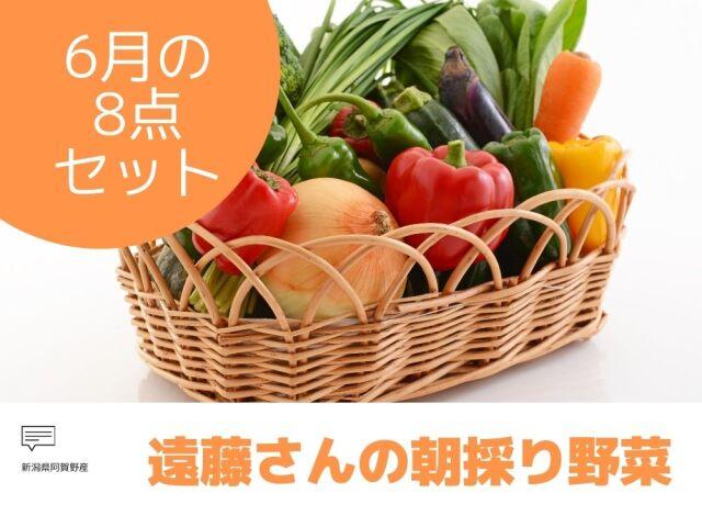 遠藤さんの朝採り野菜スペシャル8点セット 新潟県阿賀野産