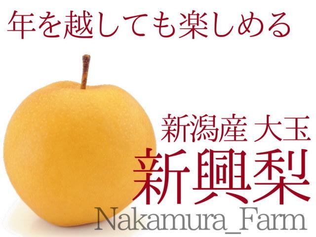 仲村農園の大玉サイズ新興梨食べ頃3kg