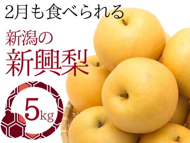 2月になっても食べられる仲村農園の新興梨5kgセット
