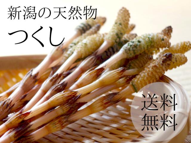 新潟県新発田市で採取、天然つくし1キロが送料無料