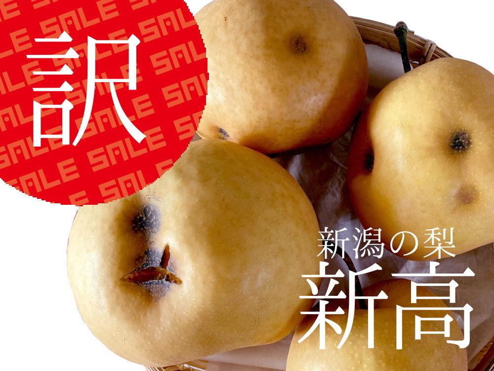仲村農園の訳あり新高梨が超特価