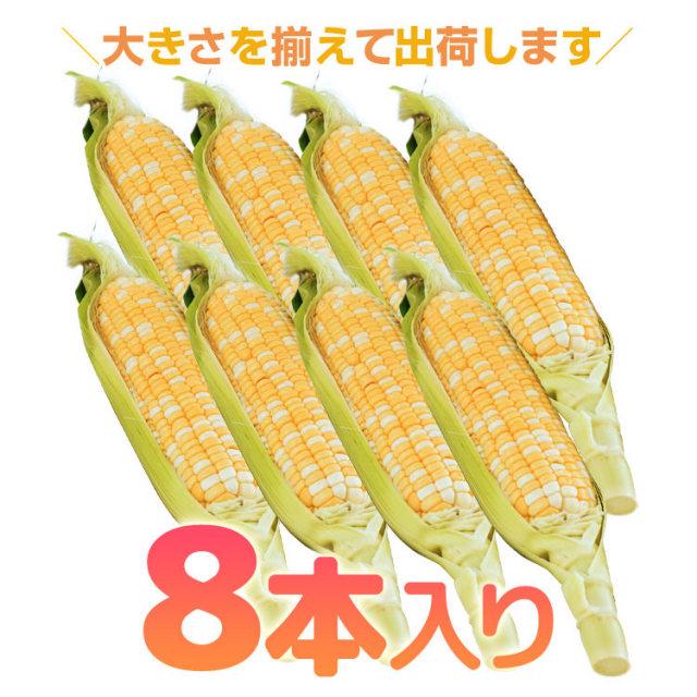 タカネコーン_05