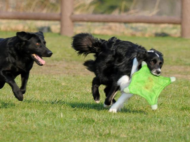 チャキット 犬用ディスク フライング・スクワレル