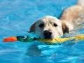 水に浮くおもちゃ ゲット・ウェット・ダック