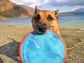 チャキット 犬用ディスク パラフライト