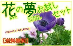 花の夢セット