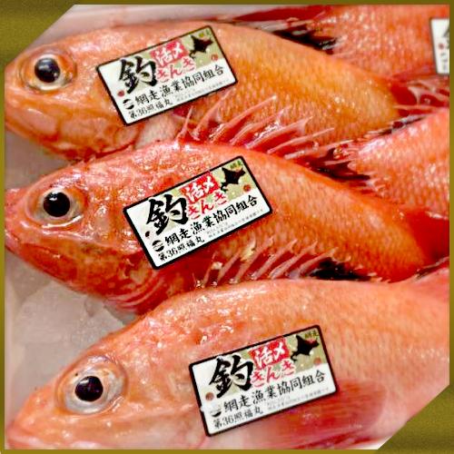 【業務用】活〆釣きんき 4kg前後(6尾入り)