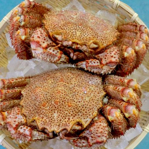 北海道の味!毛蟹500g前後×2尾