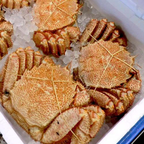 北海道の味!毛蟹500g前後×3尾