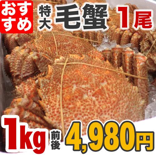 毛蟹 1kg前後×1尾