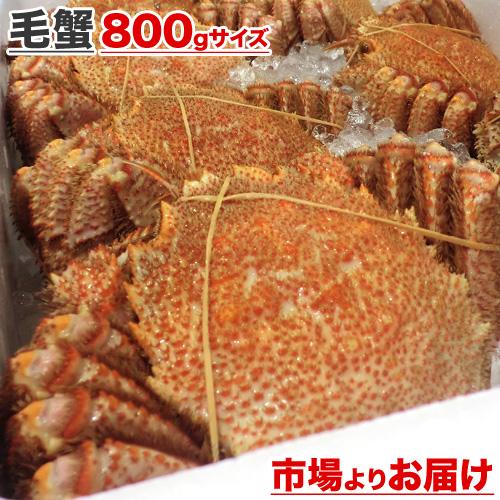 毛蟹 800g前後×1尾