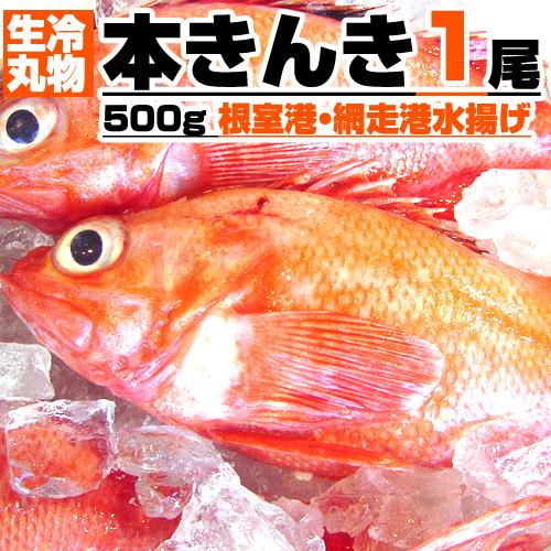 【生冷・丸物】本きんき 1尾×500g前後 丸もの生冷凍