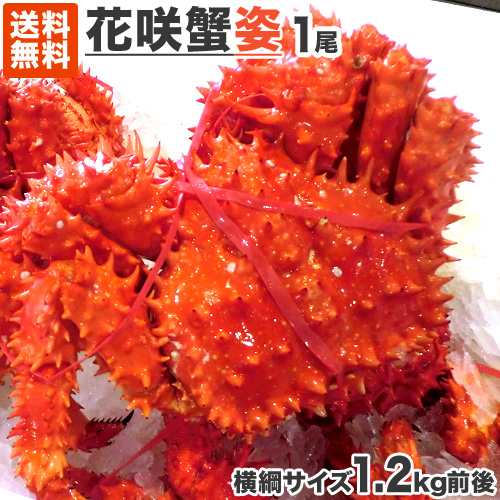 特大 花咲蟹 姿 1kg前後 「1尾からどうぞ!」