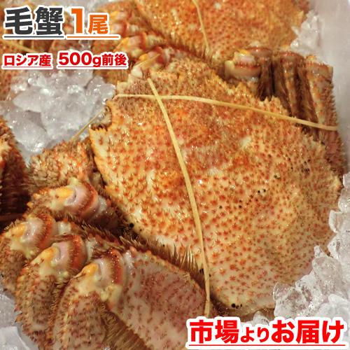 毛蟹 500g前後 × 1尾
