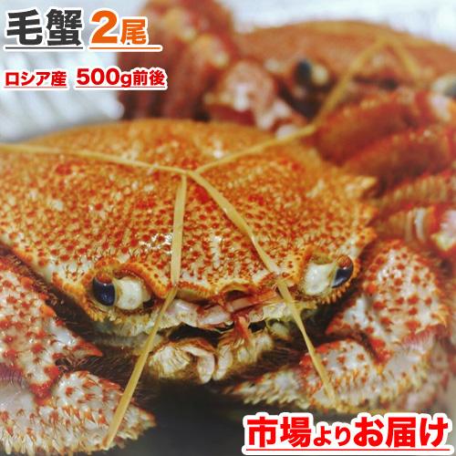 毛蟹 500g前後 × 2尾