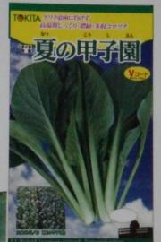 トキタ 夏の甲子園 小松菜