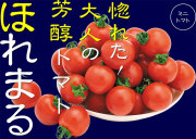 渡辺農事 ほれまる ミニトマト
