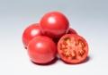 サカタ 麗月 トマト 1,000粒