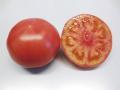 トキタ 豊作祈願1103 大玉トマト