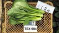 トキタ種苗 TX‐984 コマツナ
