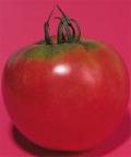 タキイ 強力米寿 トマト