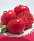 タキイ 桃太郎8 トマト