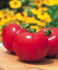 タキイ 桃太郎ファイト トマト