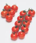 タキイ フルティカ 中玉トマト