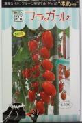 トキタ フラガール ミニトマト