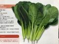 トーホク かんな小松菜
