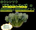 武蔵野種苗園 ブラッシュアップ ホウレンソウ M3万粒