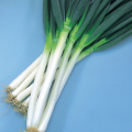 トキタ 緑の剣 ネギ