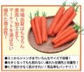丸種 オレンジアロー ニンジン