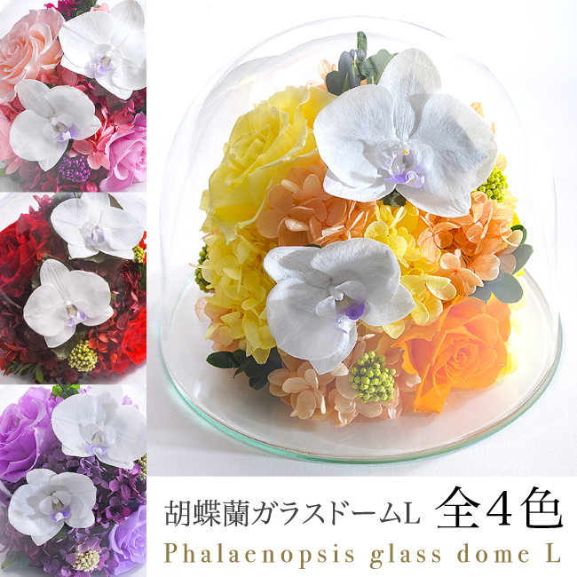 プリザーブドフラワー #胡蝶蘭のガラスドーム〈2L〉(リニューアル) 送料無料 水色BOX 【出荷:3営業日】