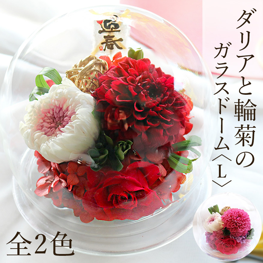 プリザーブドフラワー #ダリアと輪菊のガラスドーム〈L〉 送料無料 【出荷:3営業日】