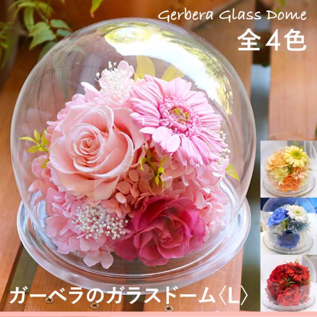 プリザーブドフラワー #ガーベラのガラスドーム〈L〉  送料無料 【出荷:3営業日】