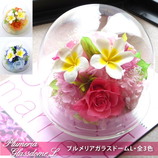 プリザーブドフラワー #プルメリアガラスドーム〈L〉  送料無料 【出荷:3営業日】
