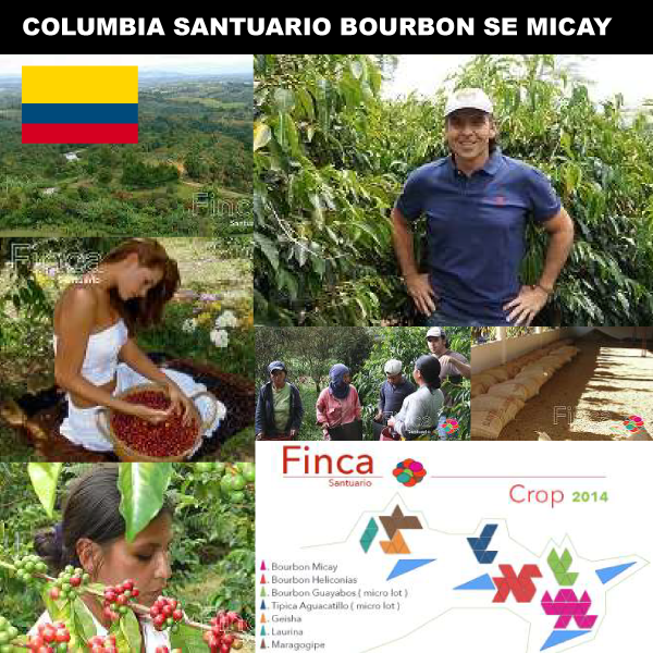 SUZUKI COFFEE 鈴木コーヒー コロンビアサントゥアリオ農園ブルボンSEミカイ1