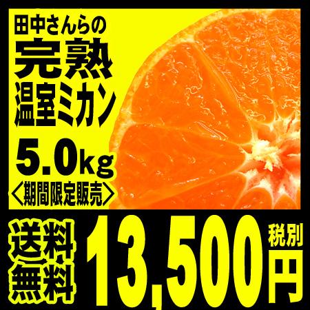 【7月上旬より】田中さんらの完熟温室みかん 5kg 「北海道・沖縄は+540円」