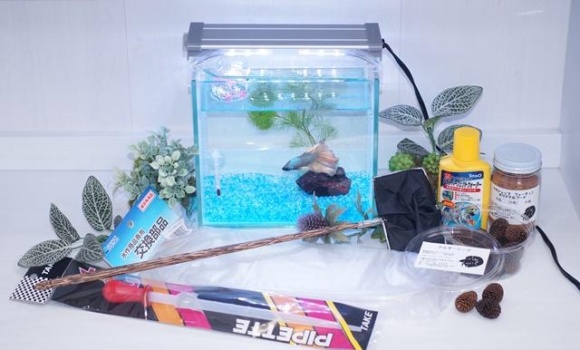 ショーベタ飼育スターターセット〜水槽1点ヒーターなし【送料無料】〜